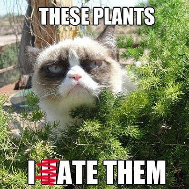 plant blog2