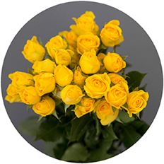 ROSES SPRAY S.A. YELLOW